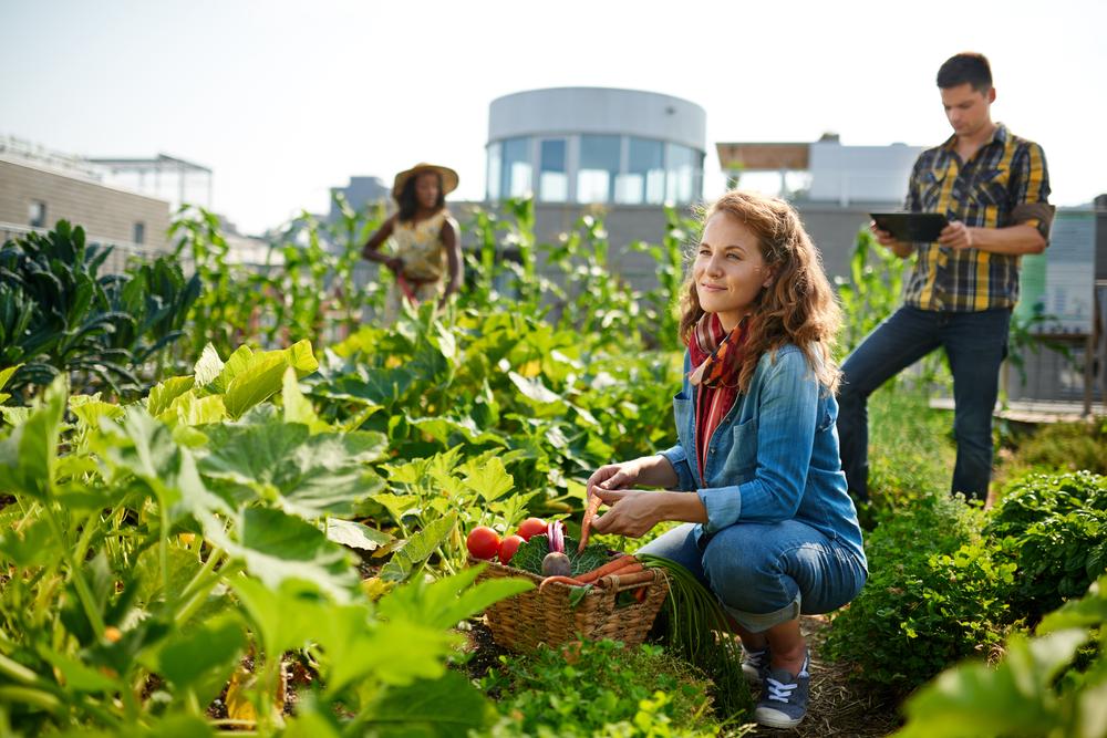 Eco-Friendly Summer Activities, sustainable farming, upick farms, farms near me