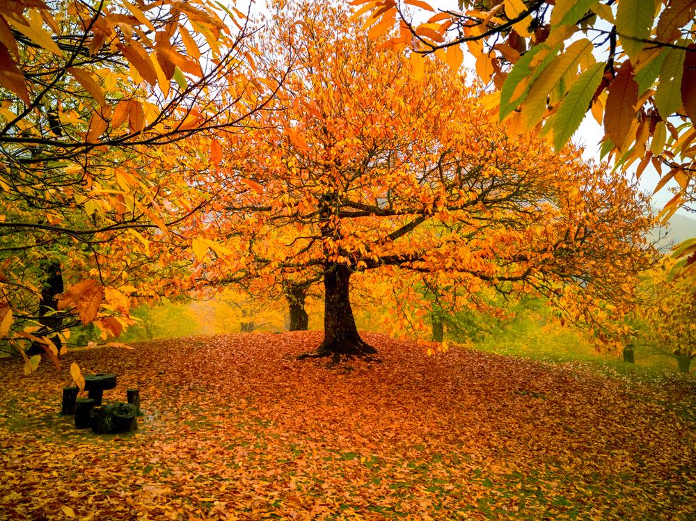 Fall Family Fun, fall foliage, ideas for fall, family fall activities